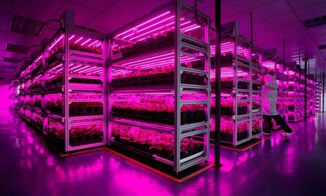 Trồng rau sạch bằng đèn LED sản lượng 80 tấn mỗi năm - Ảnh 3