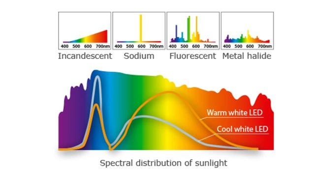 Ảnh hưởng của ánh sáng tới con người - Ảnh 4