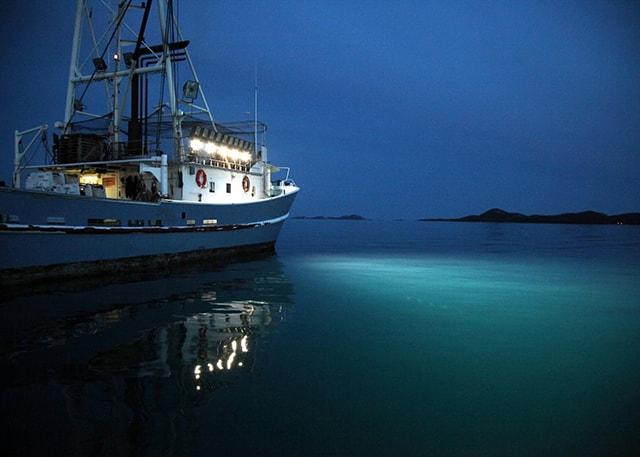 Đèn LED đánh bắt cá - Tiết kiệm mà hiệu quả - Ảnh 1